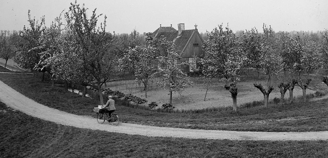 1930 Bloeiende fruitbomen in de Beemster. Foto Rijksdienst voor het Cultureel Erfgoed, objectr. SP0031