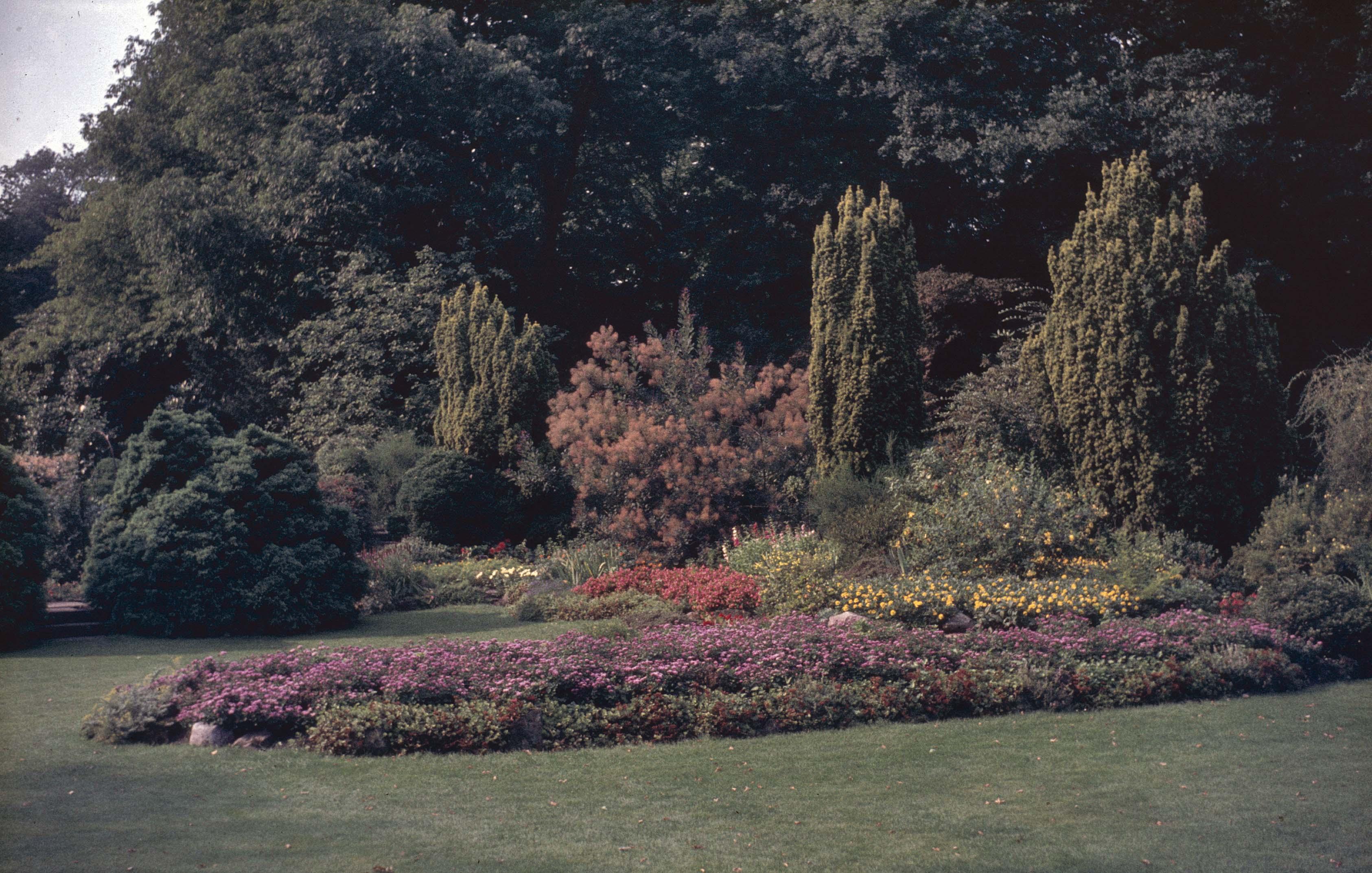 1970 - overzicht, landschapstuin, border met fluweelboom. Foto van Rijksdienst voor het Cultureel Erfgoed, objectnr. 404.789